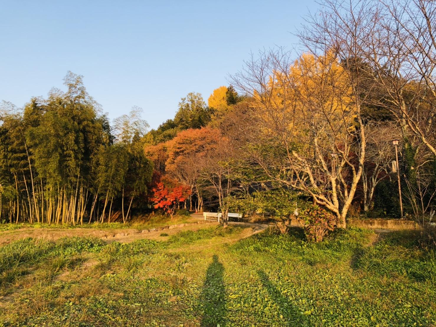chisei park (1)